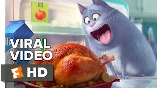 The Secret Life of Pets VIRAL VIDEO - Meet Chloe (2016) - Jenny Slate Animated Movie HD