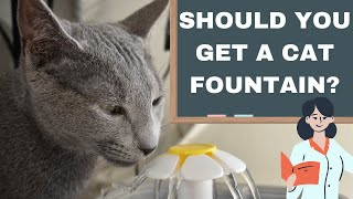Tips for Keeping your Cat Hydrated: What the Science Says