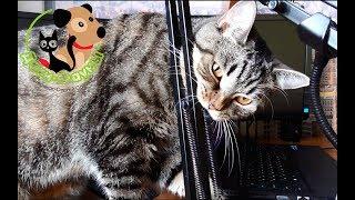 Чем мы кормим своего кота Сэмыча. Видео для подписчиков