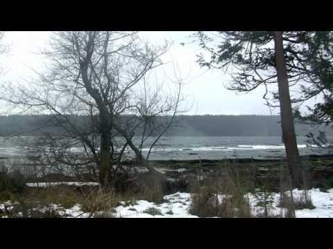BALD EAGLES SUFFER A GRIM WINTER SEASON  on HORNBY ISLAND ~~ A VIDEO ESSAY DOCUMENTARY poster