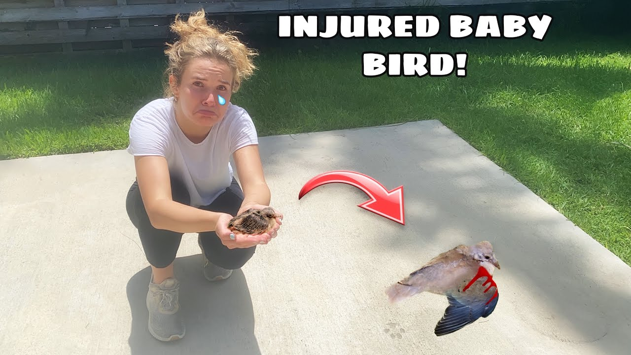 DYING BABY BIRD FOUND UNABLE TO FLY! WILL IT SURVIVE ...