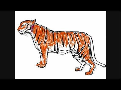 Tiger Zeichnung Online Zeichnen Lernen