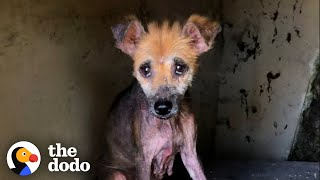 Abandoned Naked Dog Is So Fluffy Now | The Dodo