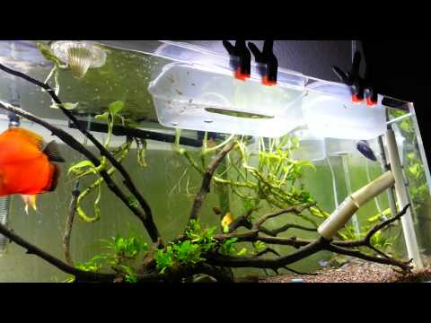 Discus FIsh Aquarium Hatchery Farm Setup 8