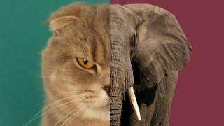 고양이가-코끼리로-합체변신하는거-봤어요