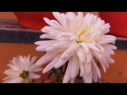 whole-body-regeneration-|-remove-toxins-and-cleanse-infection-|-dissolve-subconscious-negativity