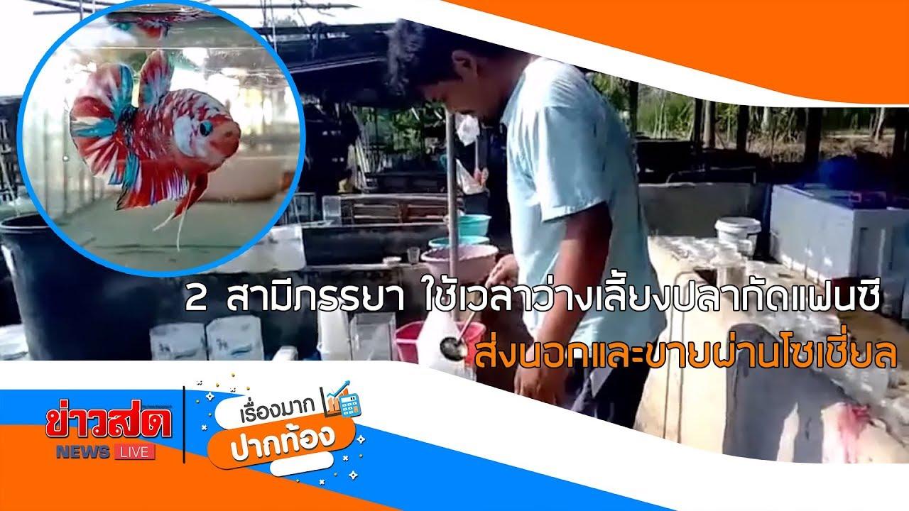 สามีภรรยา ใช้เวลาว่างเลี้ยงปลากัดแฟนซี ส่งนอกและขายผ่านโซเชี่ยล : Matichon TV
