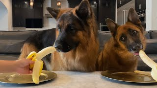 Dogs Review Different Foods
