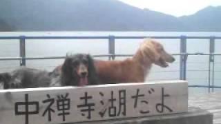 中禅寺湖観光大使レディとティアラです!