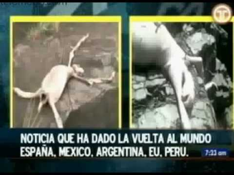 interview  with stupid kids that killed myterious alien beast in Panama