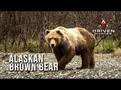 Shot Of A Lifetime -- Nicole's Alaskan Brown Bear | Throwback Hunts