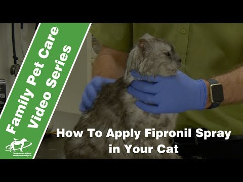 How to apply fipronil spray to a cat- Companion Animal Vets