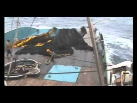 Tuna Purse Seine Fishing   Raffaello