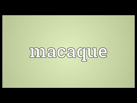 Macaque Meaning