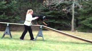 Juli (rottweiler) Boot Camp Dog Training Video