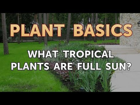 What Tropical Plants Are Full Sun?