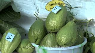 Yam, Squash & Pumpkin On Display At Hornbill Festival Vegetables Competition, Nagaland