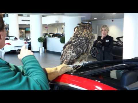 A Eurasian Eagle Owl at Porsche Mayfair,