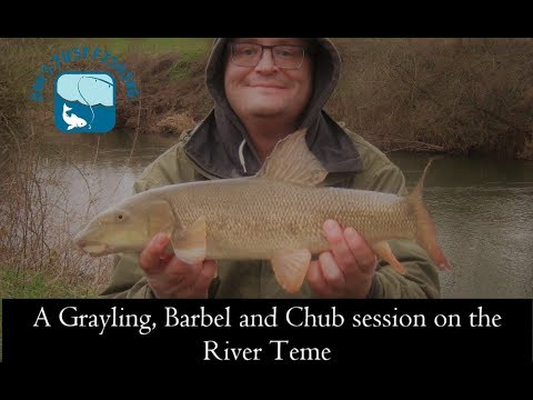 A Session Grayling, Barbel & Chub Fishing On The River Teme