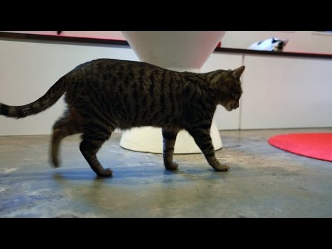 My Cat From Heaven: Koneko Cat Cafe