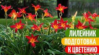 Не УПУСТИТЕ Момент Подкормить ЛИЛЕЙНИК Весной. Мои цветы.