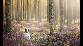 Собака облаяла камень в лесу Решилась его поднять и тут