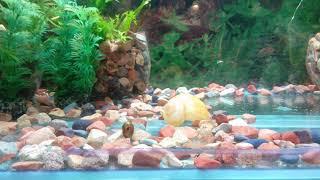 Советы для начинающих аквариумистов, баланс в аквариуме