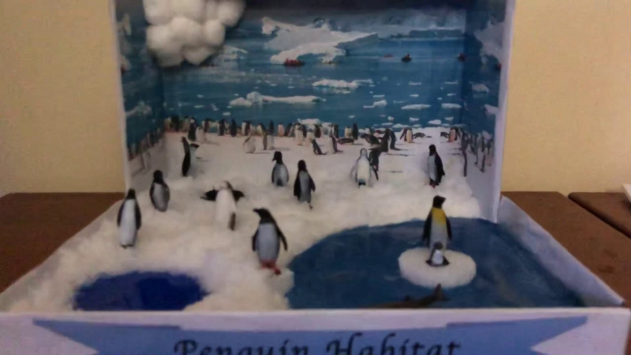 Penguins Habitat Diorama Project For School Project Youtube