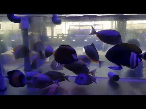 New Fish Shipment 10Dec2015 Wonderland Aquatic
