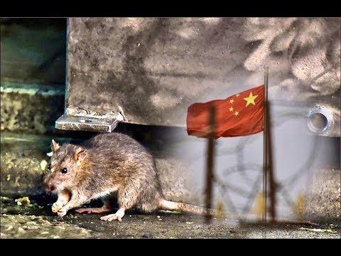 《石涛聚焦》「北京黑死病-肺鼠疫最新消息」中国疾控:空气传染-杆菌深藏草原泥土中 已知病例区域直径260公里 447人被隔离「2020年春天冻土开化後 不是很可怕吗?」