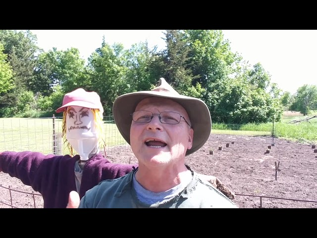The Scarecrows of Our Life!