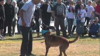 Cali K9® Bay Area Dog Training - Bay Area Pet Expo - San Jose Dog Training
