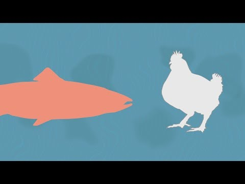 Farmed Seafood and Livestock Stack Up Differently Using Alternate Feed Efficiency Measure
