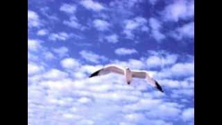 Nomadi La libertà di volare