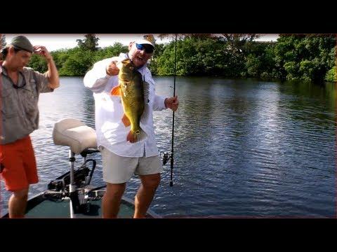 Best top water south florida peacock bass fishing with for Top water bass fishing