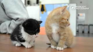 [심쿵주의] 우리 지금 졸리냥? 너무 졸린 귀여운 두 새끼 고양이 two cute sleepy kittens