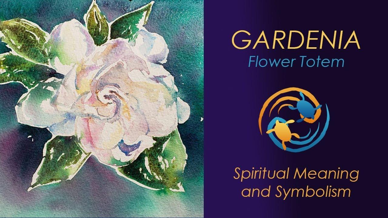 Gardenia Flower Meaning Symbolic Meaning of Gardenia