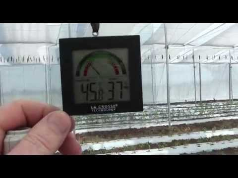 Young plants performing well at 45C in the Cravo Education and Training Center, October 25, 2014
