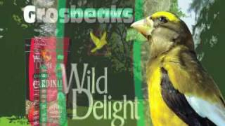 Wild Delight Bird Seed from D&D Company VIdeo