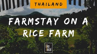 Farmstay on a rice farm in northern Thailand