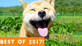 BEST ANIMALS OF 2017 | Funny Pet Videos