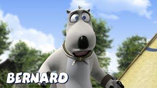 Download Bernard Bear | Good Camping Bud AND MORE | Cartoons for Children | Full Episodes