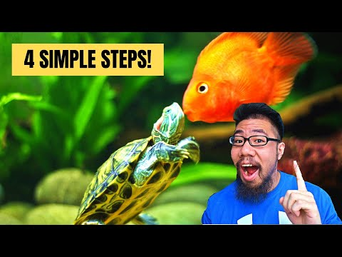 How To Keep Fish With Turtles