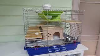 Наш питомец милый крыс содержание уход
