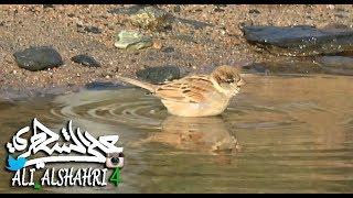 لقطات لاستحمام الطيور بالماء Birds shower