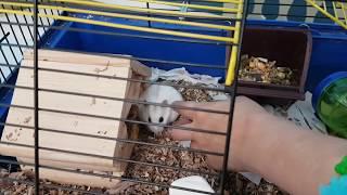 Кролик Баффи, Хомки Фрост и Куки - Наши домашние животные. Парк развлечений для детей и их питомцев