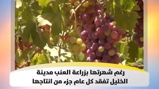 رغم شهرتها بزراعة العنب  مدينة الخليل  تفقد كل عام جزء من انتاجها