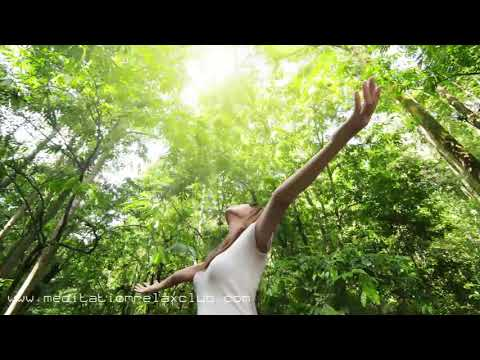 3 HOURS Asian Meditation Music: Relax in the Forest with Sounds of Nature