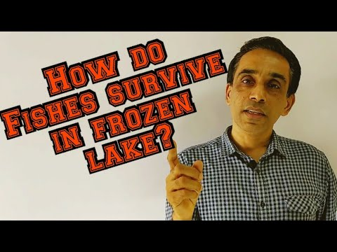 How Do Fishes Survive In Frozen Lake? | NEET Window|