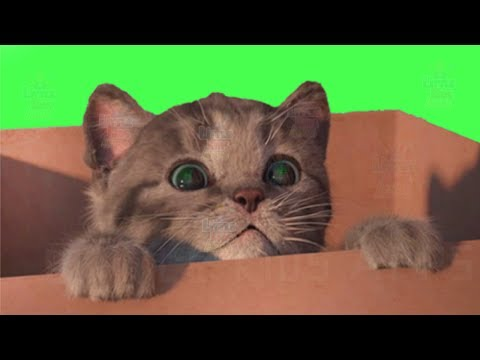 Little Kitten My Favorite Cat Play Fun Pet Care Game for Kids and Toddlers